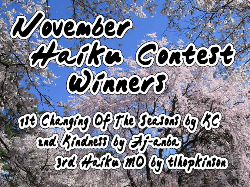 essay contest november